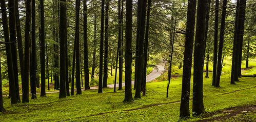 trees forest nikon himalayas uttarakhand d80 pithoragarh