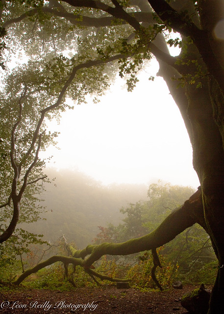 Misty Morning Hop-14