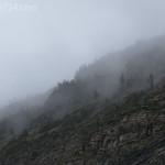 Foggy Ridgeline