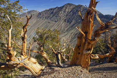 Inyo Mountains Wilderness
