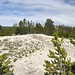 Whistle Geyser (Black Sand Basin, Upper Geyser Basin, Yellowstone Hotspot Volcano, nw Wyoming, USA)