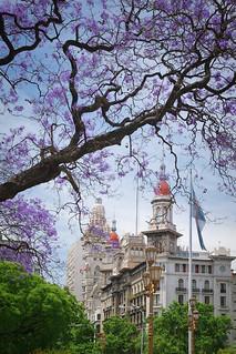 Jacarandas | by cortomaltese