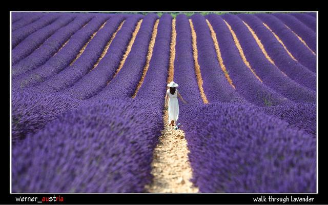 07-14_5902_Provence