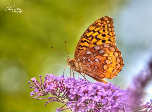 Butterfly 8 2014