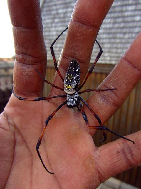 Madagascar3 - 011