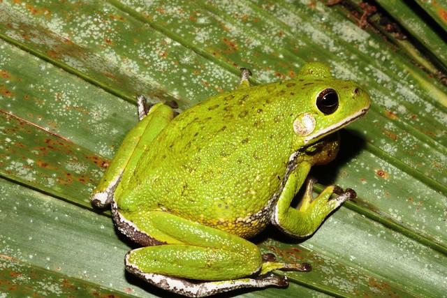 Frog Listening Network