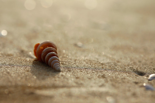 Lonely Seashell On The Beach | by VinothChandar