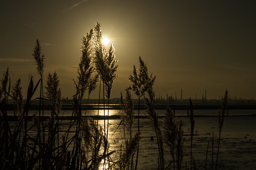 sun evening grass river bankriverbank hamble warsash hampshire