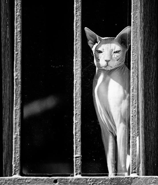 Window cat 1, Saint Petersburg, Russia 2014