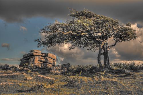 countryside cloudy windy devon windswept granite tor dartmoor hawthorn combestonetor