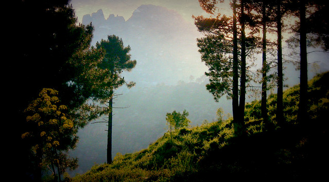 KORSIKA , Am Col de Larone, 11365/3826