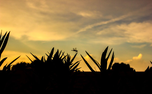 sunset vacation holiday canon orlando florida dragonfly bokeh 40mm