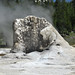 Giant Geyser (Giant Group, Upper Geyser Basin, Yellowstone Hotspot Volcano, nw Wyoming, USA)