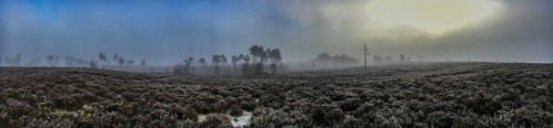heathland morning surrey nnr sunrise rising markhortonphotography heath nationalnaturereserve surreyheath thursleycommon fog panorama mist boardwalk thatmacroguy