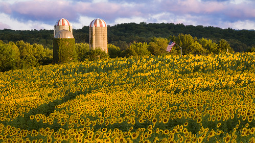 people field sunrise photography newjersey unitedstates americanflag farmland silo sunflower agriculture select publish farmbuilding herbaceous floriculture frankford collectionlandscape publishflickr collectionnewjersey