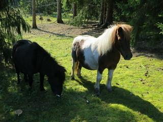 2014_09_07 Hästar i Vikersvik