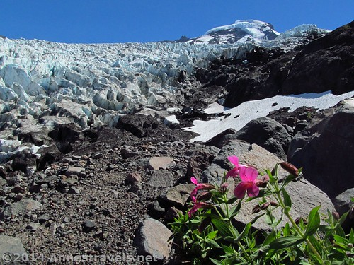The Coleman Glacier from Heliotrope Divide, Mount Baker Wilderness, Washington