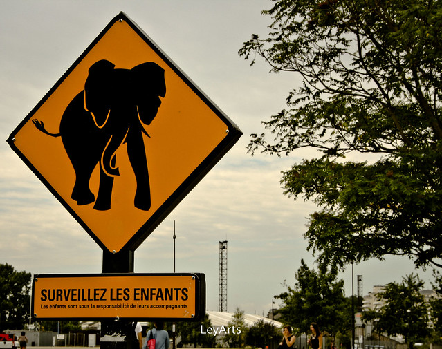Attention, éléphant