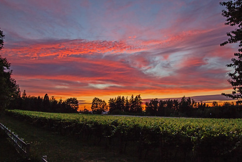 sunset nature mcmenamins edgefield vinyards