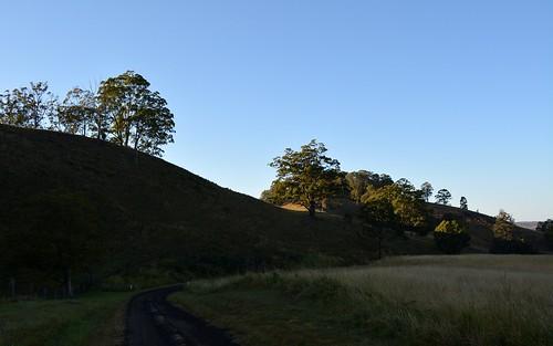 road morning trees landscape countryside australia pasture nsw dirtroad australianlandscape grazing gravelroad hillsides northernrivers morninglandscape leycestercreekvalley quiltyroad