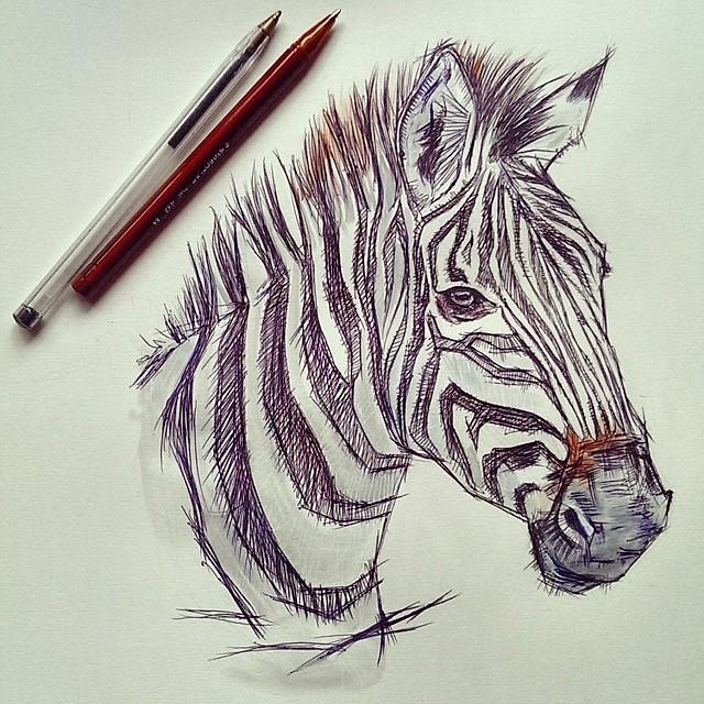 Zebra | Made with biro pens www facebook com/StarDustMegArt