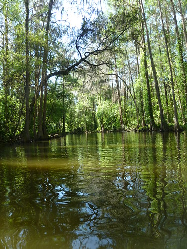 trees green nature water landscape flora florida doracanal