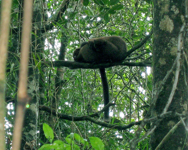 Madagascar2 - 018
