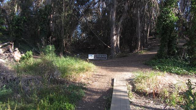 IMG_0339 goleta Ellwood monarch grove area