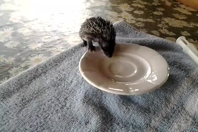 Io mangio da solo!