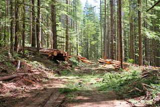 Gordon Creek timber demo (ELT)   by BLMOregon