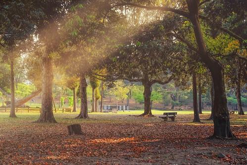 sunset sun tree japan asia day shadows clear fujifilm nara leafs narapark raylight travelvacation