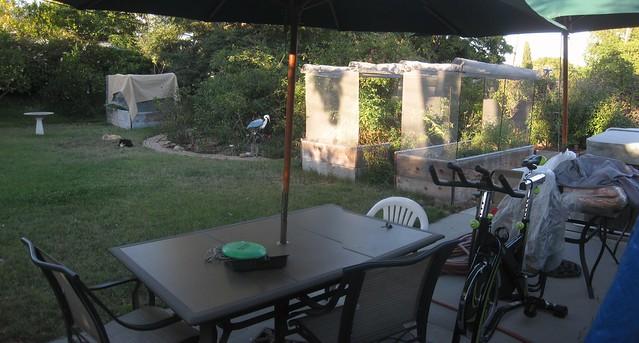 IMG_1791_2 140811 sam dew cats backyard ICE rm stitch99