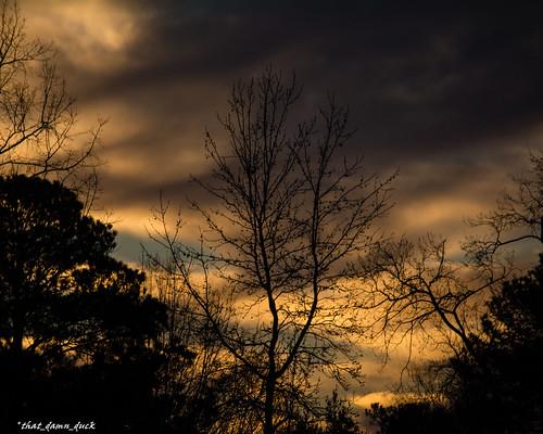 nature trees sunset sundown clouds