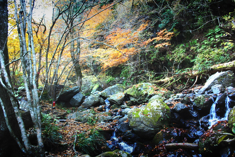 棒ノ折山(棒ノ嶺) 登山