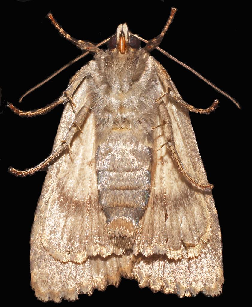 Moth(ny)8:19:14