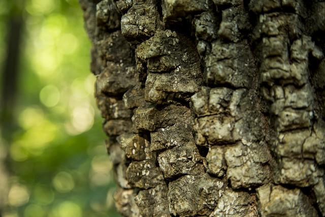 Bumpy bark