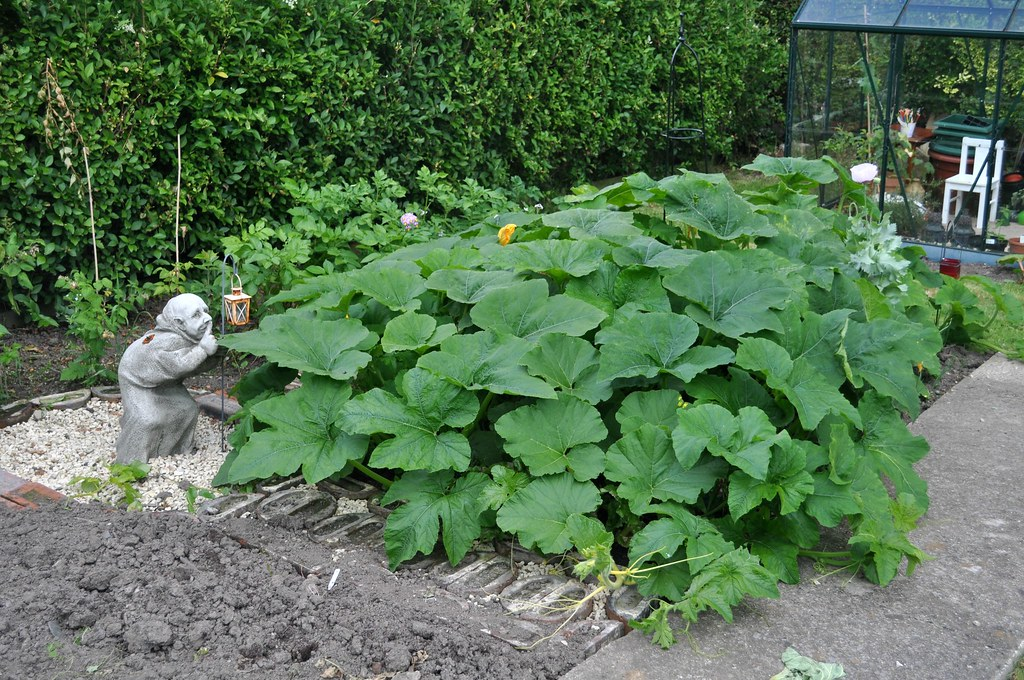 Pumpkin141