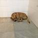 Homeless Dog :-(
