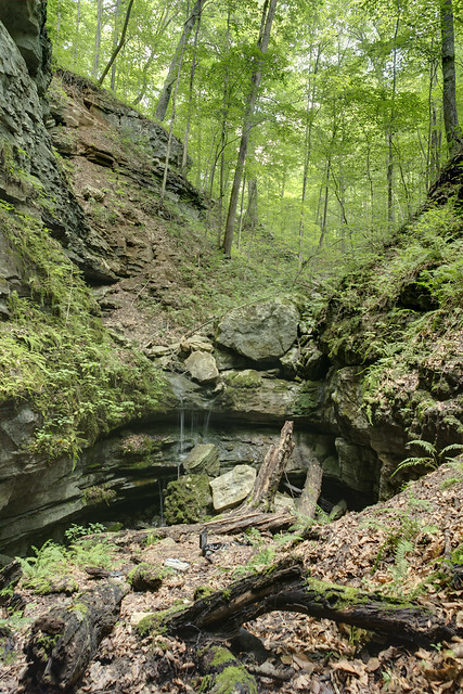 Entrance, Sinking Cove Cave, Franklin County, Tennessee