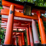 Fushimi Inari-taisha ( 伏見稲荷大社 )