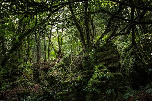 forestofdeandistrict england unitedkingdom forestofdean