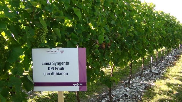 Syngenta in campo - Grape Field Tour 2014
