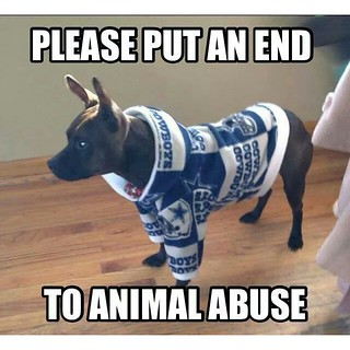 huge discount 49160 61e36 Stop dressing your dog in Dallas Cowboys gear, it's animal ...