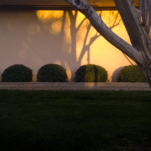 photos4pny shadow yard tree landscaping goldenhour lightplay lawn shrubbery samsung wall suburbs riverside suburbanlandscape rosesmith