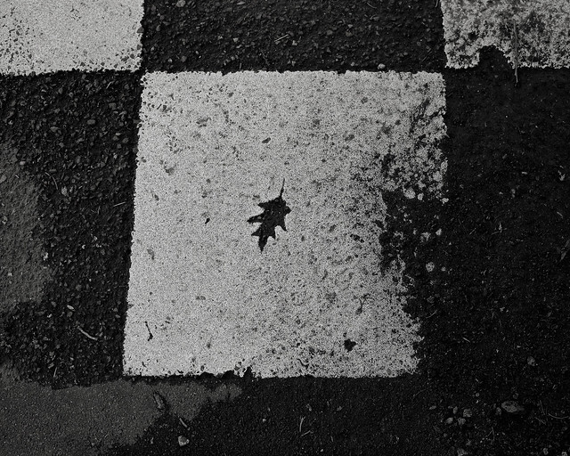 Leaf Fossil in a Speed Bump, Brentwood Street, Portland