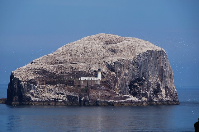 The Bass rock ( with its forgotten castle )