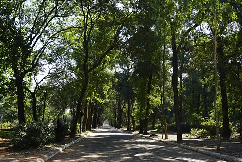 trees avenida arboles jardin bosque botanico asuncion paraguay