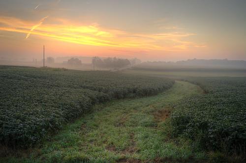 morning ohio anna mist fog sunrise early haze fields oh soybean annaoh sonya7r sel35f28z ilce7r