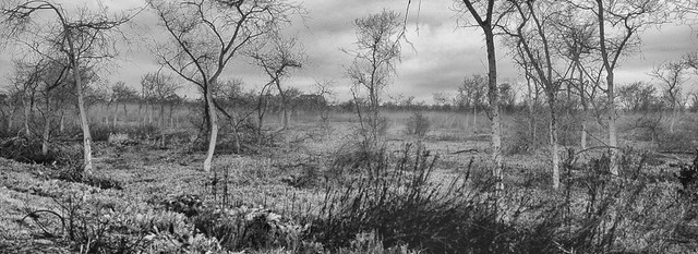 Mt. Madonna - 1yr after the fire - XPAN