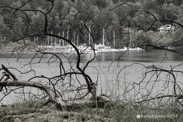 Roesland Park - Pender Island